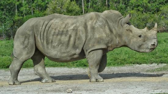 rhinoheader